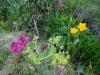 Védett növények, hegyekben, szó szerint